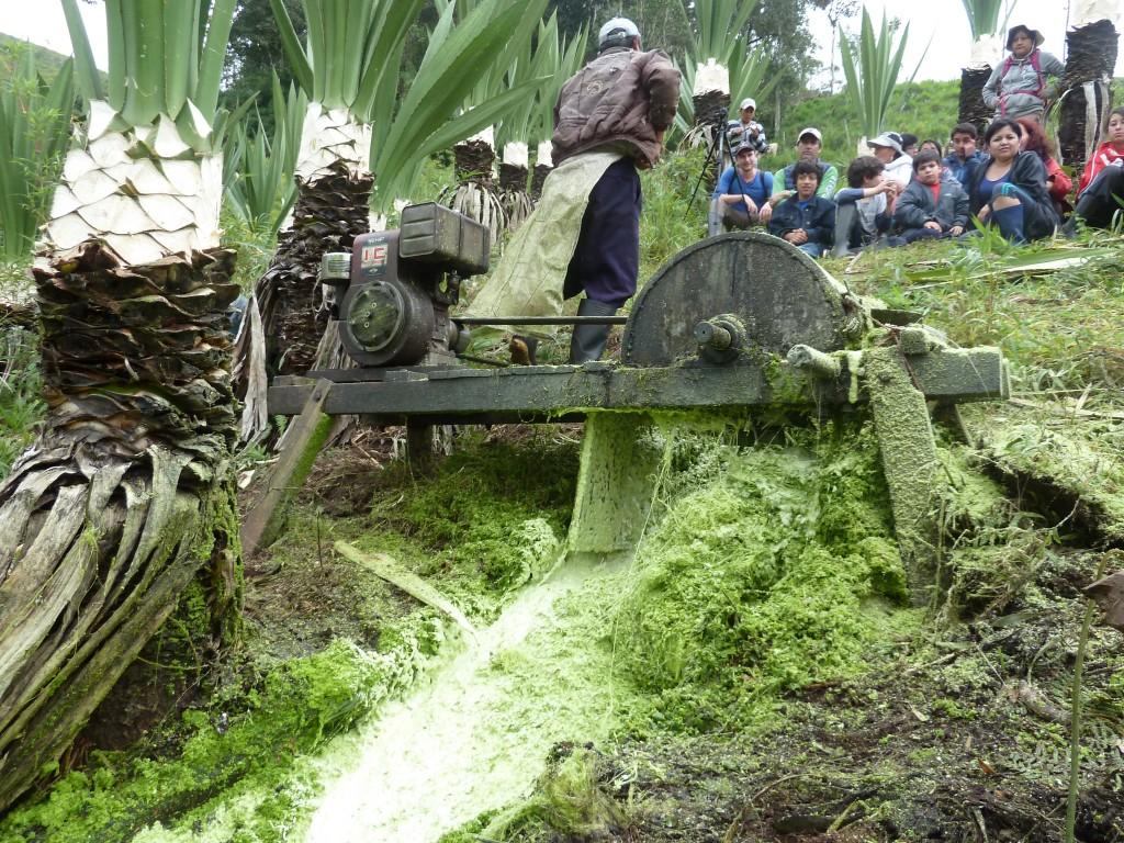 Sisal biogas 1