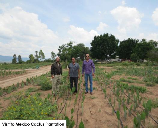 Visit to Mexico Cactus Plantation (Cactus page)