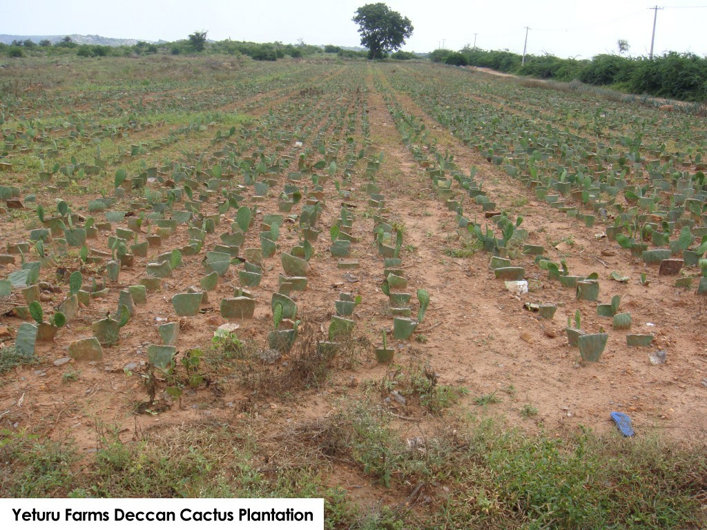 Yeturus Farms Cactus Plantation (About us)