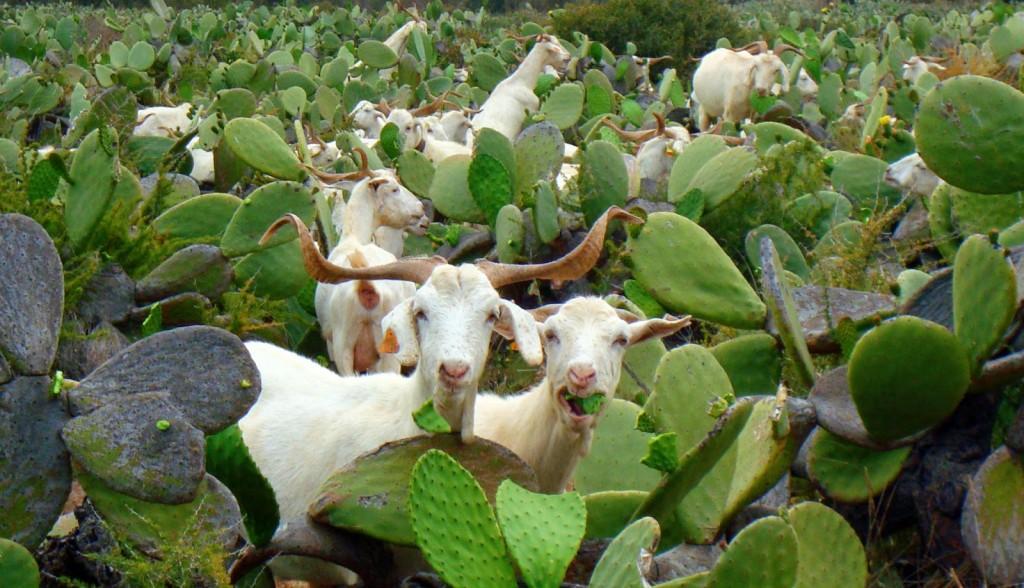 cactus22